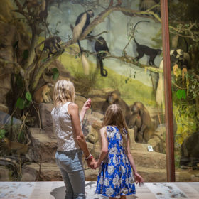 A mother and daughter looking at an exhibition of primates in trees at the Powell-Cotton Museum, backs to us.